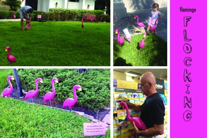 Flamingo Flocking Collage